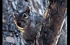 Carousel thumb sidebar graysquirrel