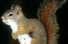 Carousel thumb sidebar redsquirrel3